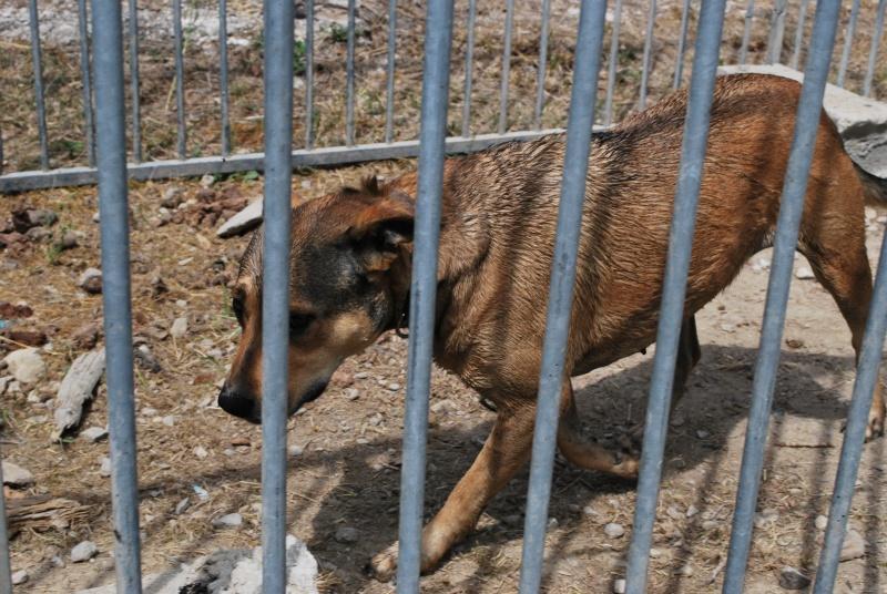 URGENT : S.O.S pour Tyson et Nickie en sursis (Rhône Alpes/Drôme) Dsc_0513