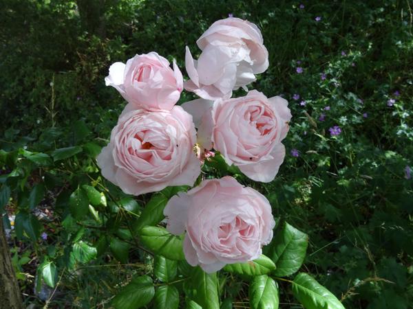 j'ai descendu dans mon jardin - Page 2 Nahema11