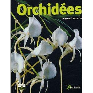 Orchidées faciles à vivre Orchid12