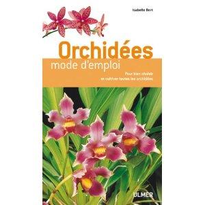 Orchidées faciles à vivre Orchid15