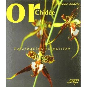 Orchidées faciles à vivre Orchid17