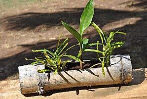 utilisation de bambous Photo-10