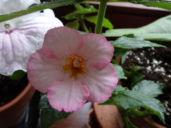 j'ai descendu dans mon jardin - Page 2 Rozi_r10