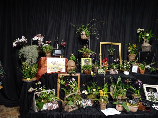 Orchidays 2014 - Exposition à la Ferme de l'Hostellerie Nivelles (Belgique) - 29, 30, 31 mai, 1er juin 2014 Stand_10