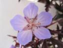 Geranium vivaces - leurs expositions Praten13