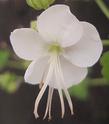 Geranium vivaces - leurs expositions White_10