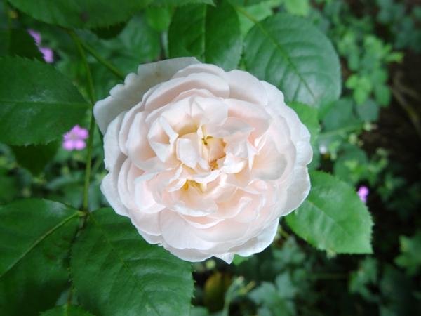 j'ai descendu dans mon jardin - Page 5 Winche10
