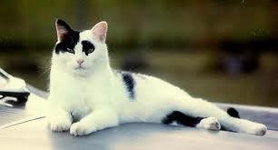 Warrior Cats [RP APP] Comm11