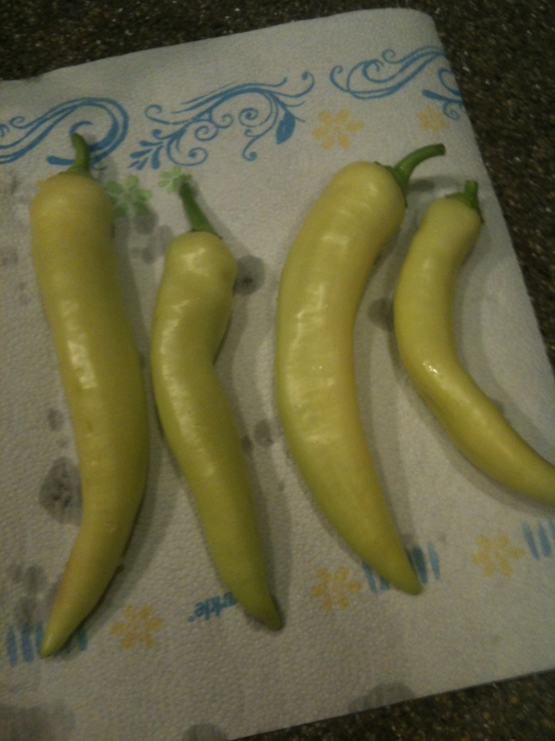 Subway Sweet Banana Peppers - Using Normal Jar Photo110