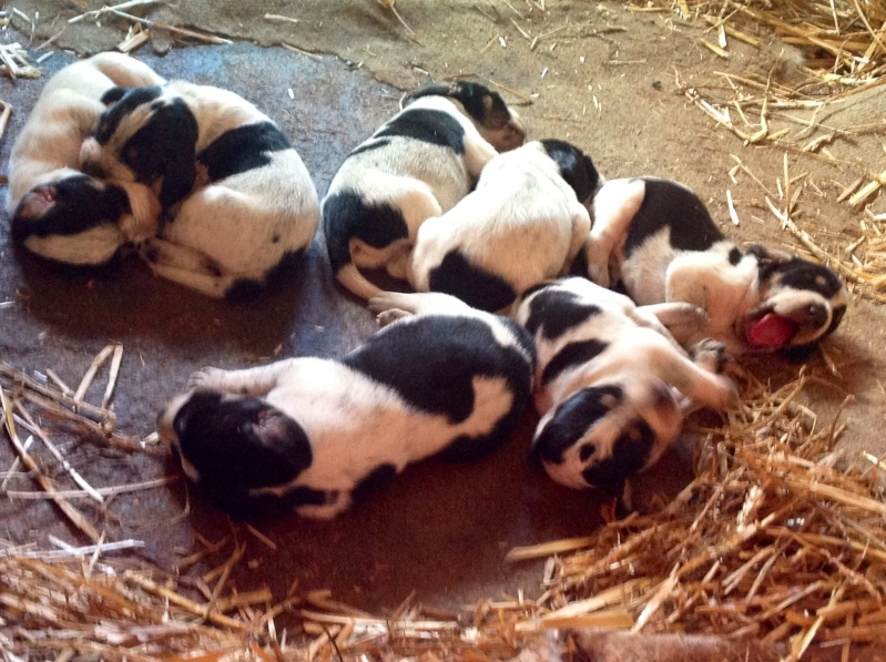 carnet rose canin Chiots10