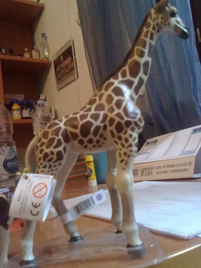 PAPO VINTAGE AT HOME, AND 2 DIFFERENT GIRAFFES  15102011