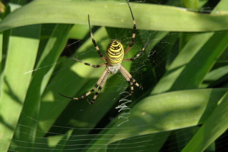 Une araignée du soir 00214