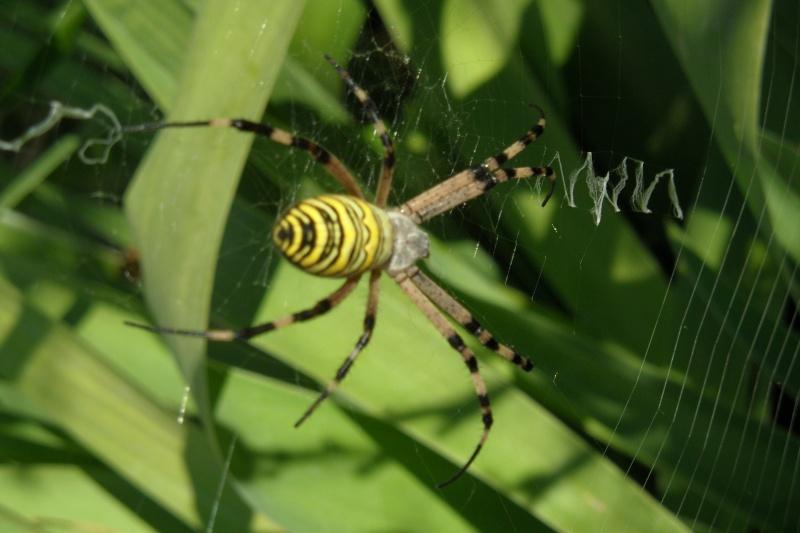 Une araignée du soir 00313
