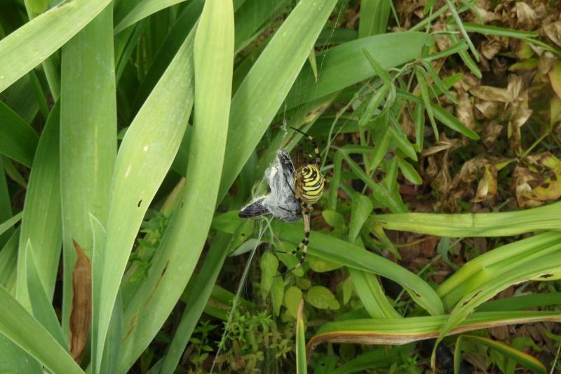 Une araignée du soir 00414