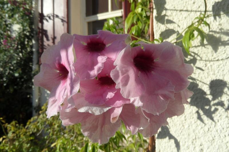 floraisons d'octobre - Page 13 00612