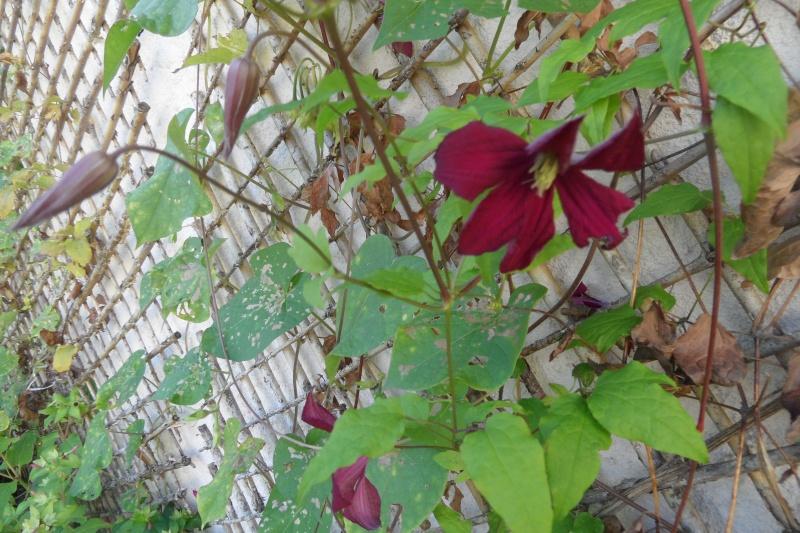 floraisons d'octobre - Page 13 00817