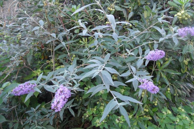 floraisons d'octobre - Page 13 01014
