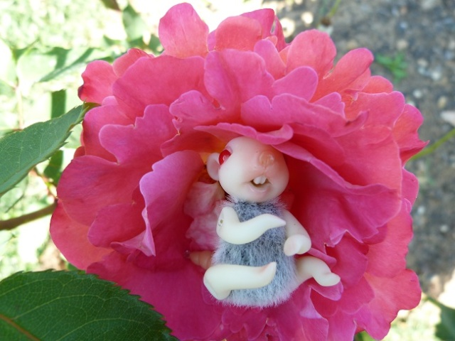 Bianca, mon petit bébé souris Photos56