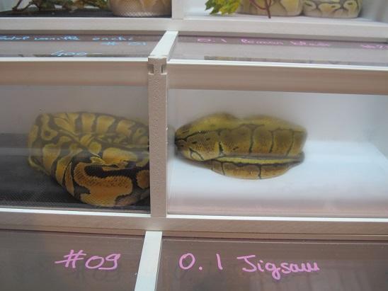 Reptil'Expo à Verdun Img_3614