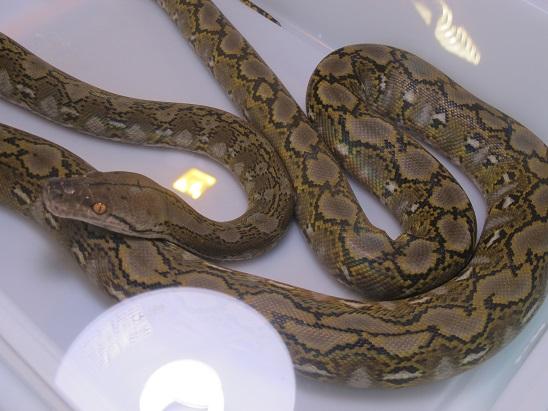Reptil'Expo à Verdun Img_3625