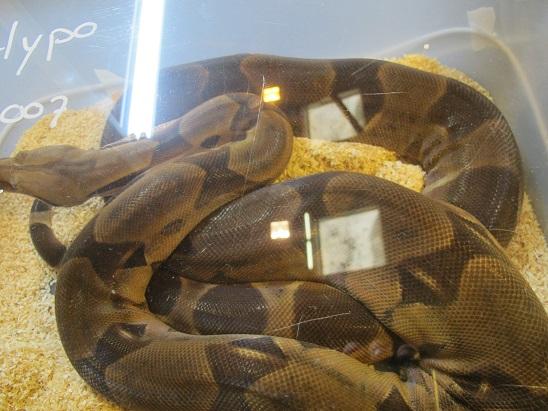 Reptil'Expo à Verdun Img_3626