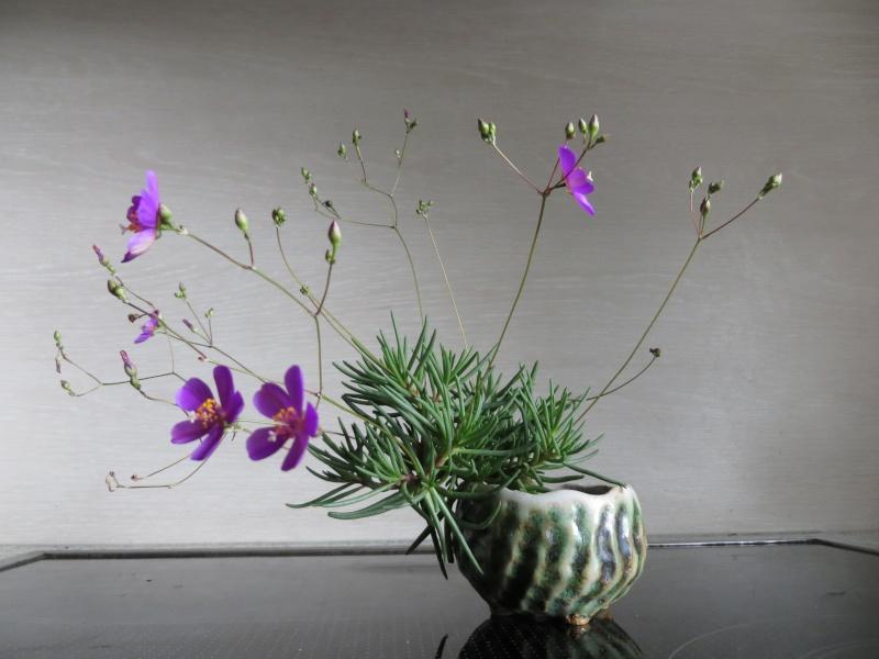 Hang- und Steingartenpflanzen - Seite 11 02_08_10