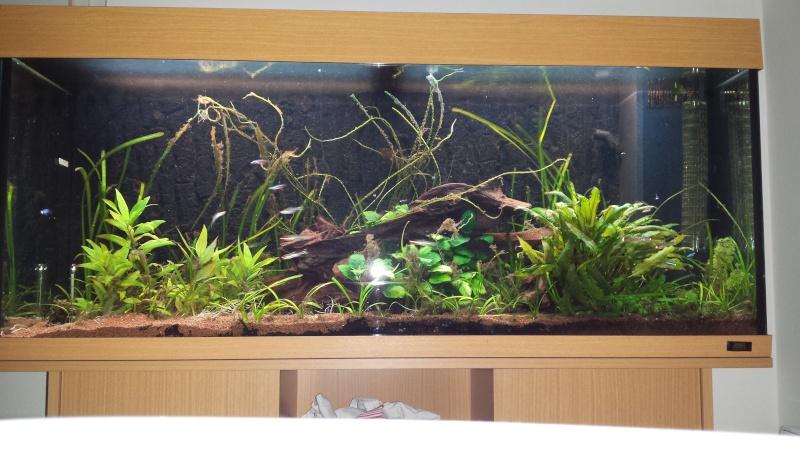 Aquarium amazonien 272L brut (rio 240) - Page 2 20140811