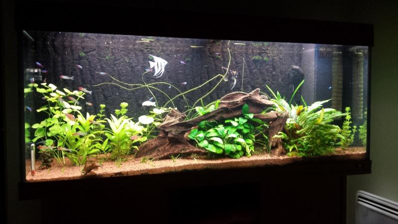 Aquarium amazonien 272L brut (rio 240) - Page 2 20140912