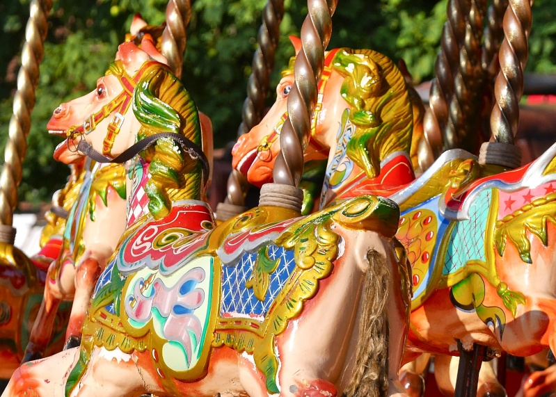 Galloping Horses!!! P1010819