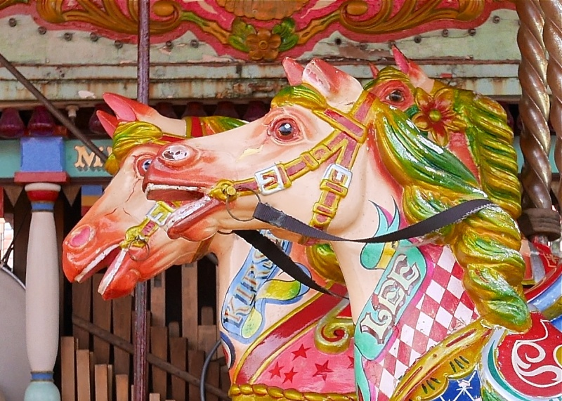 Galloping Horses!!! P1010820