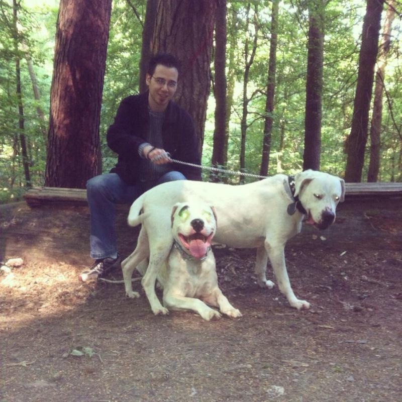 Aira et Arox deux dogos a adopter ensemble - Forbach Amour_10