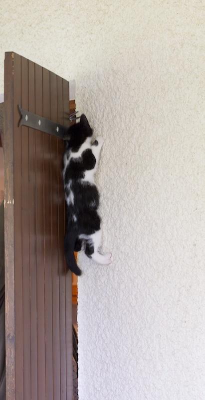 Chat singe mon rocher Catcli12