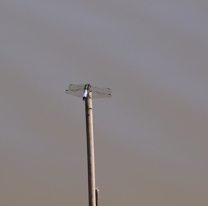 Drone Lib10