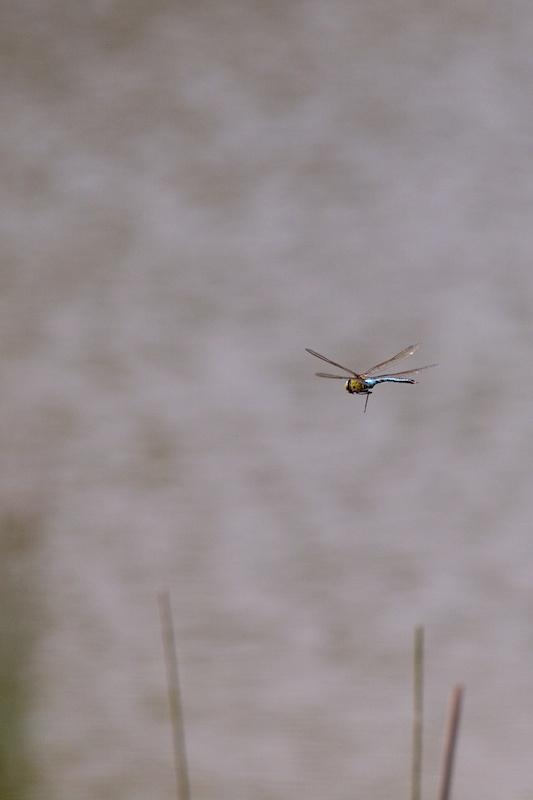 Drone Lib_210