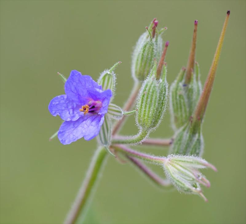 Fleur bleu Test10