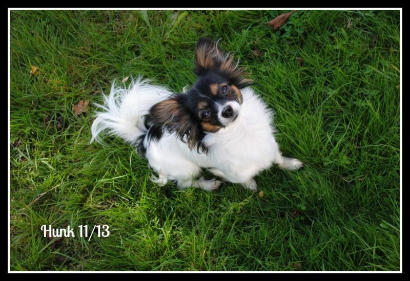 Photos de nos bêtes à poils, plumes ou autre !  09110