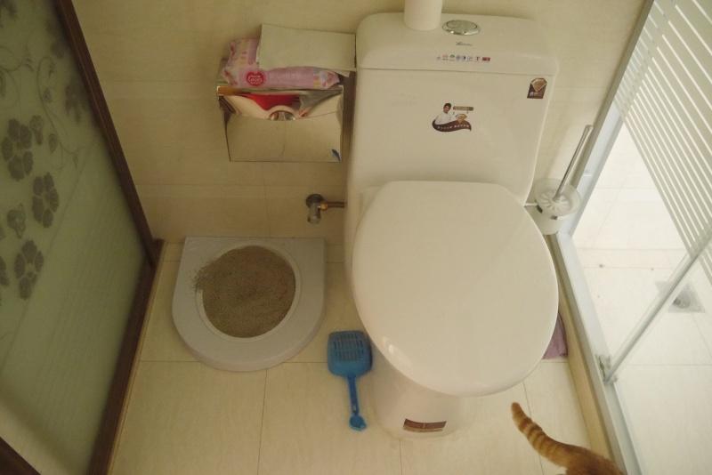 Mission : Apprendre aux minous a aller aux toilettes P1030211