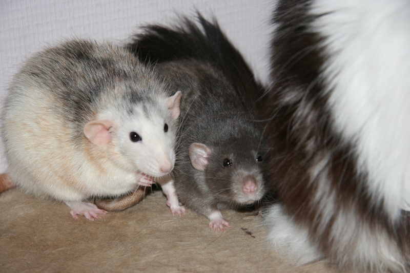 Cookie et Speedy, les ptits husky - Page 2 Img_8013
