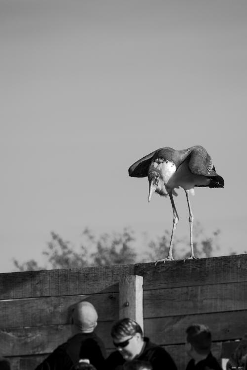Les oiseaux / série Imgp6910