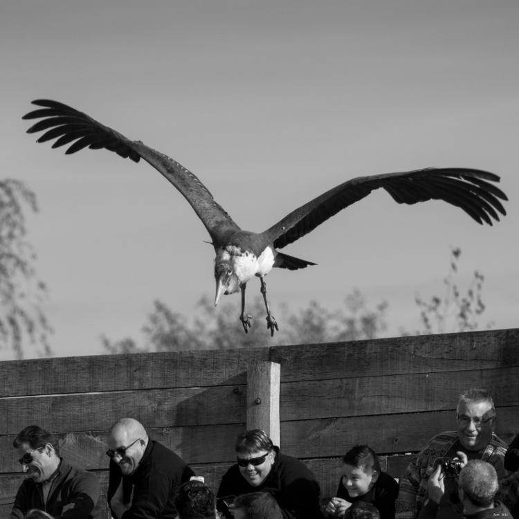 Les oiseaux / série Imgp6911