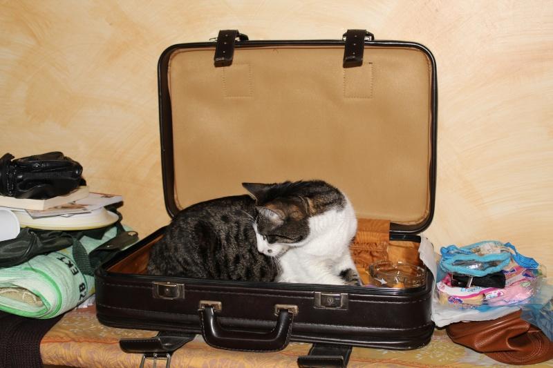 P'tite Lily prête pour les vacances ! Img_0912