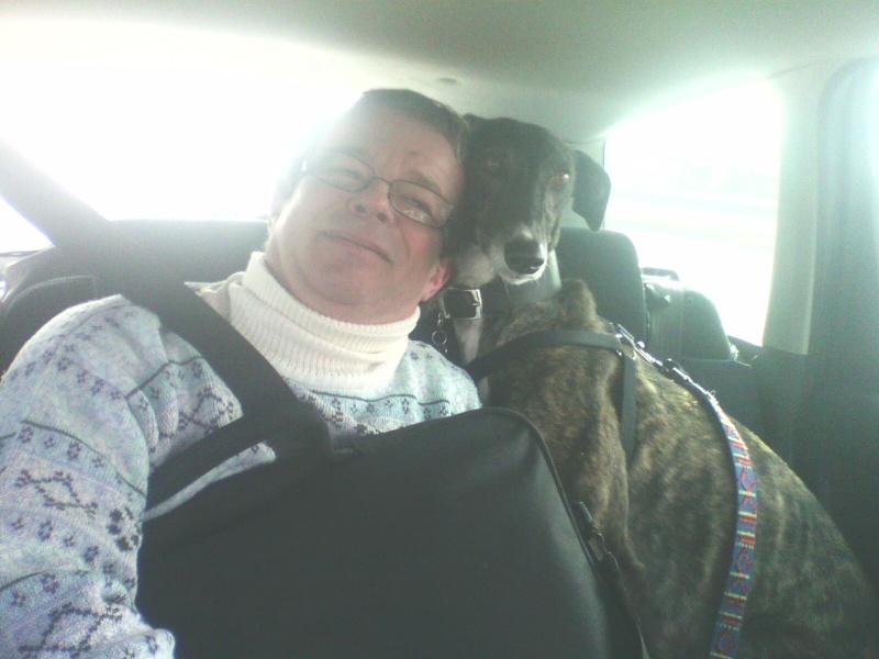 Perla , (squelettique) magnifique galga Scooby France   ADOPTEE  - Page 7 28031410