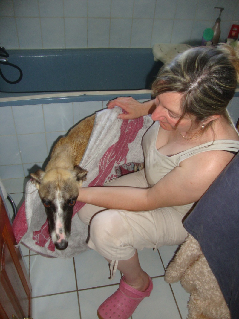 Perla , (squelettique) magnifique galga Scooby France   ADOPTEE  - Page 6 Dsc05217