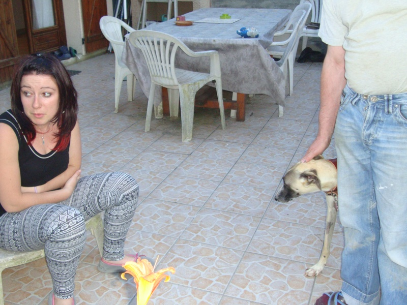 Perla , (squelettique) magnifique galga Scooby France   ADOPTEE  - Page 7 Dsc05225