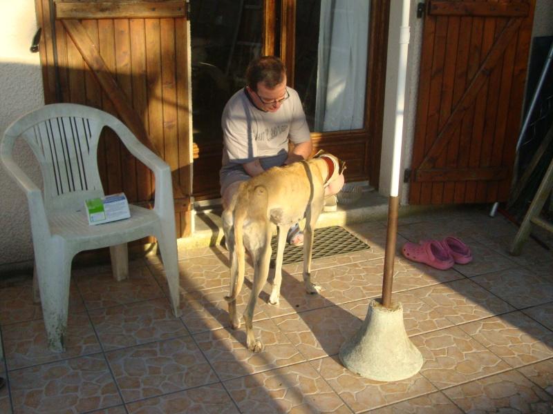 Perla , (squelettique) magnifique galga Scooby France   ADOPTEE  - Page 7 Dsc05237