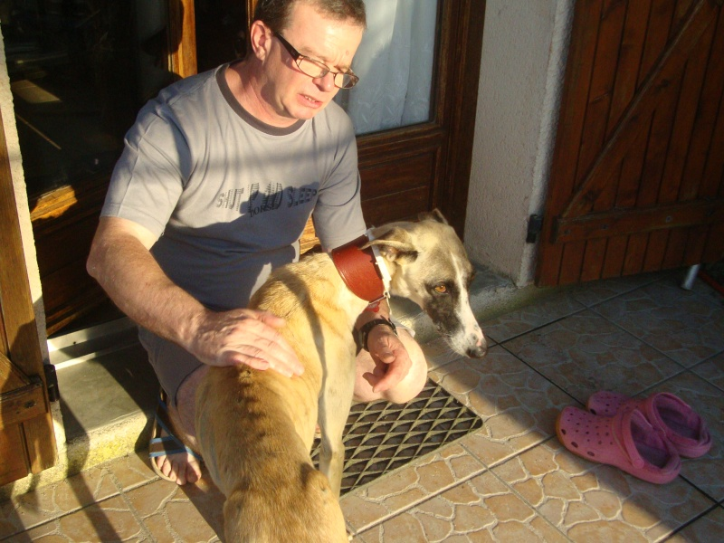 Perla , (squelettique) magnifique galga Scooby France   ADOPTEE  - Page 7 Dsc05238