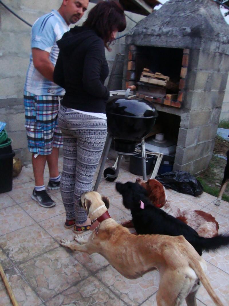 Perla , (squelettique) magnifique galga Scooby France   ADOPTEE  - Page 7 Dsc05318
