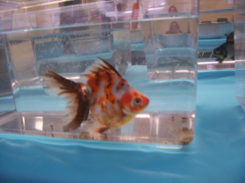 American Goldfish Association show 00312