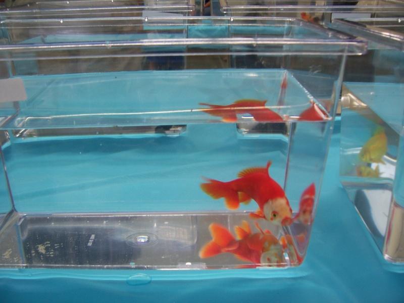 American Goldfish Association show 01311