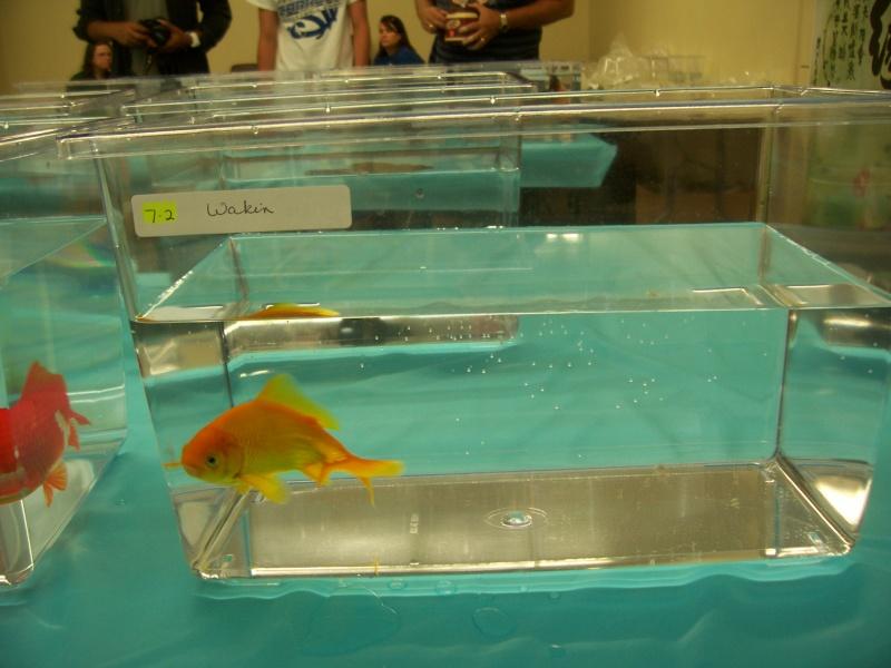 American Goldfish Association show 01412